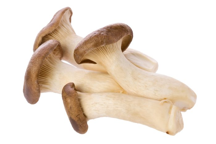 4 king trumpet mushrooms on a plain white background