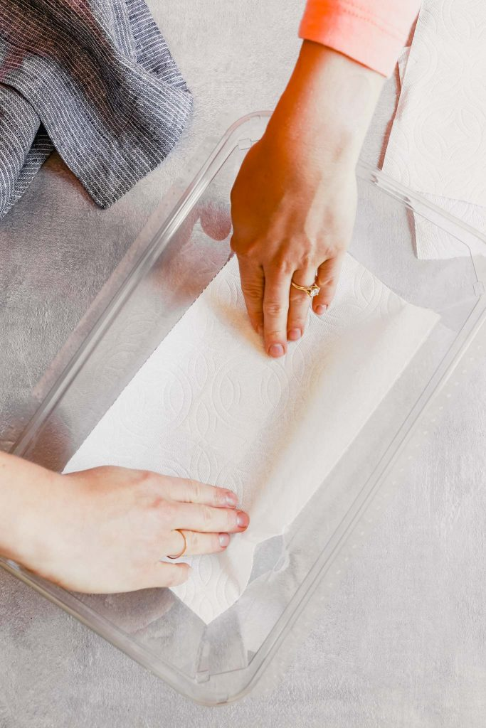 someone laying a paper towel into a plastic container