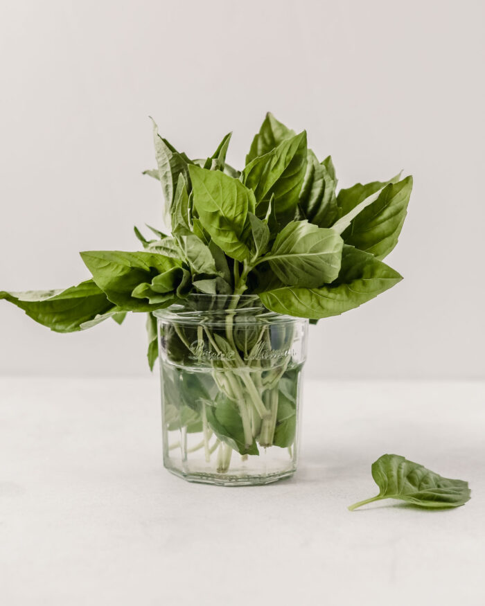 glass jar filled with water with fresh basil stuck in the jar